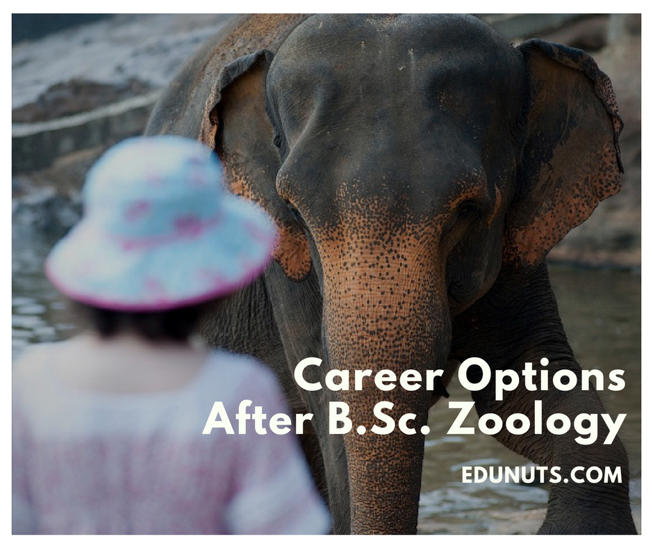 A Complete List of Career Options After B.Sc. Zoology
